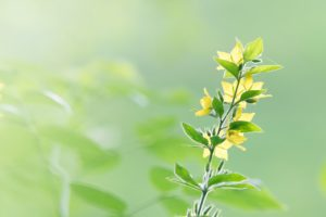 What Are Terpenes? 3