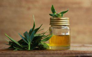 Most Common Cannabis Terpene Profiles